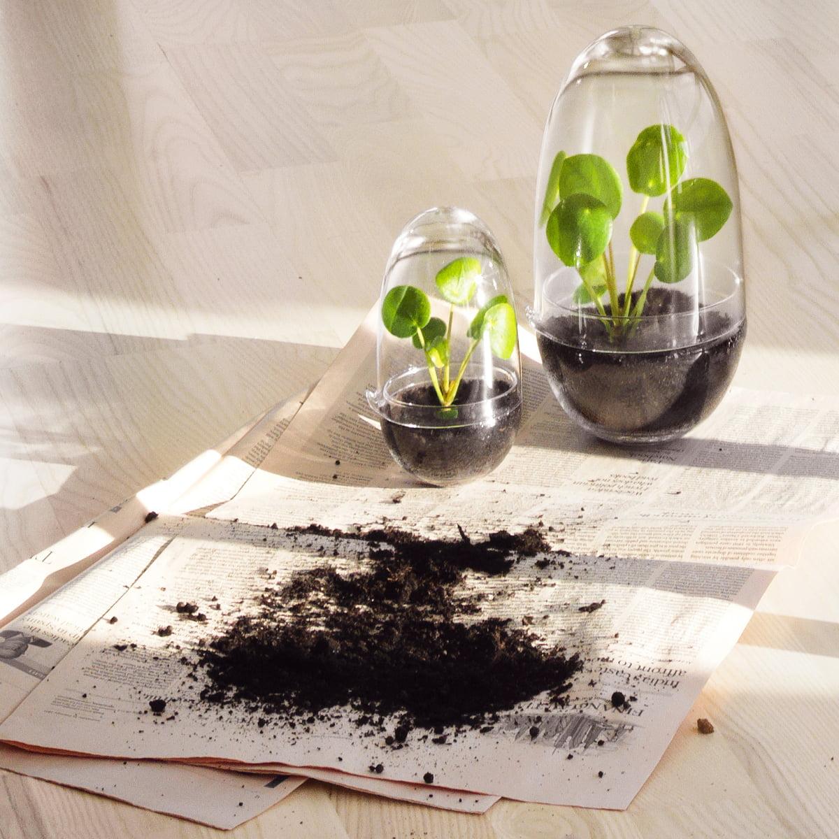 grow gew chshaus von design house stockholm. Black Bedroom Furniture Sets. Home Design Ideas